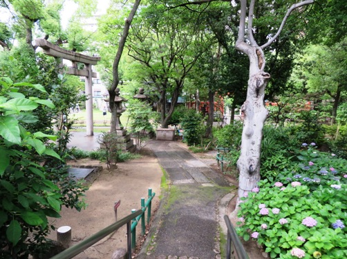 IMG_6231ikutamashrine-12.jpg