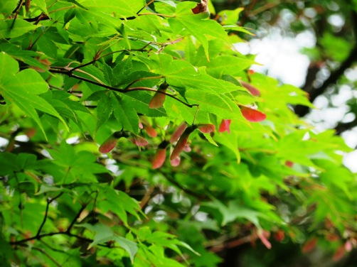 IMG_7144entsuji-11.jpg