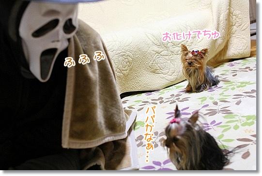 IMG_8022a.jpg