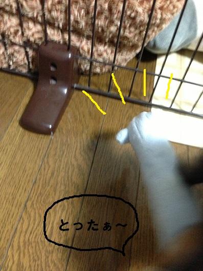 IMG_0356-1.jpg