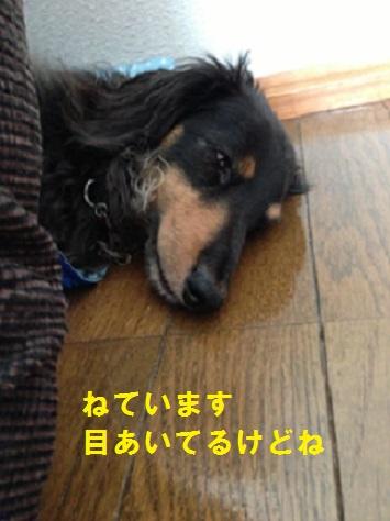 IMG_0465-1.jpg