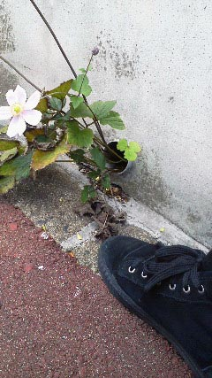 kosumosuNEC_0579.jpg