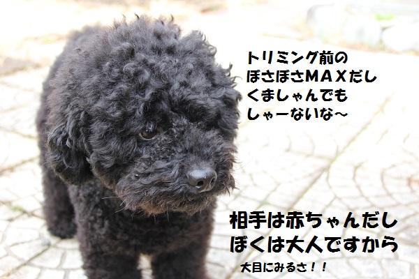 11_20130404153759.jpg