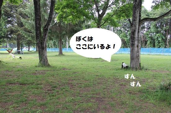 16_20130705220611.jpg