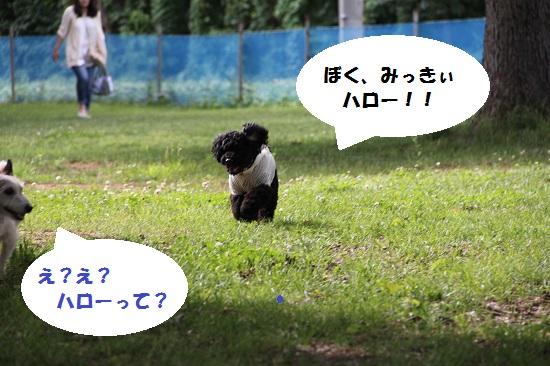 18_20130705220610.jpg