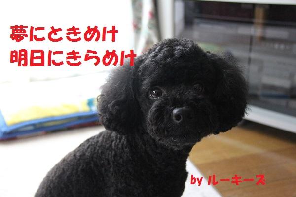 25_20130717234633.jpg