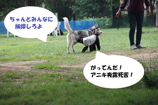 26_20130705220610.jpg