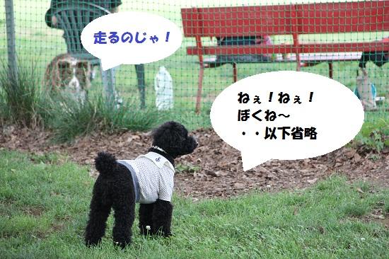 29_20130707213147.jpg