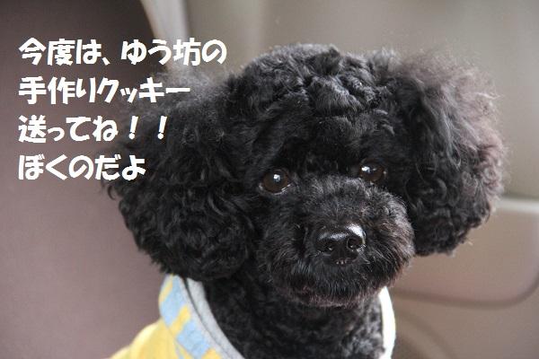 33_20130619223446.jpg