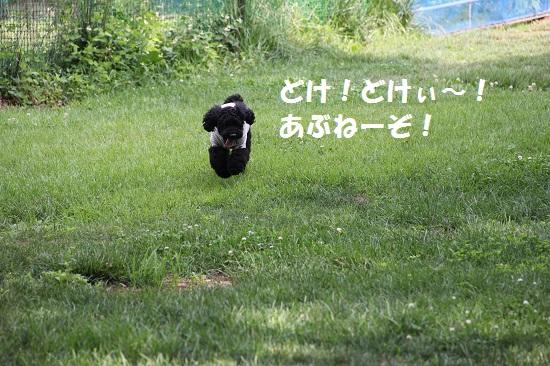 33_20130707213244.jpg