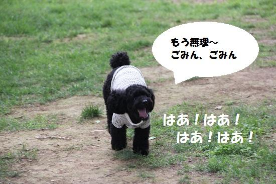 37_20130707213322.jpg