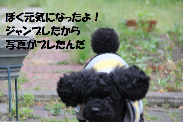 39_20130621222100.jpg