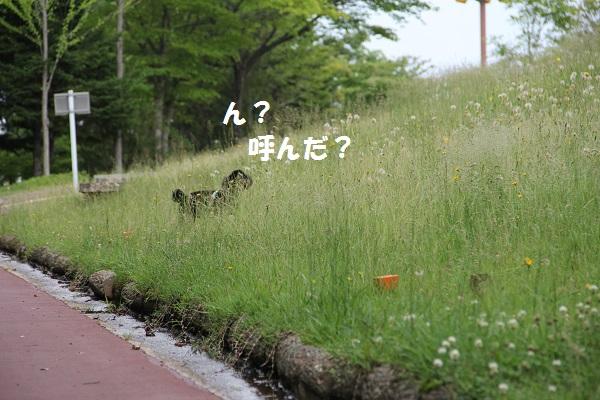 40_20130713002540.jpg