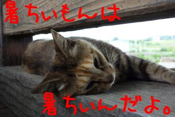 4_20130707174427.jpg