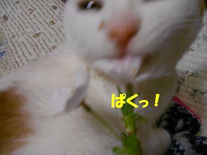 DSCN4519.jpg