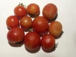 トマト141118