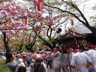 H.25.4.14羽村桜祭り5