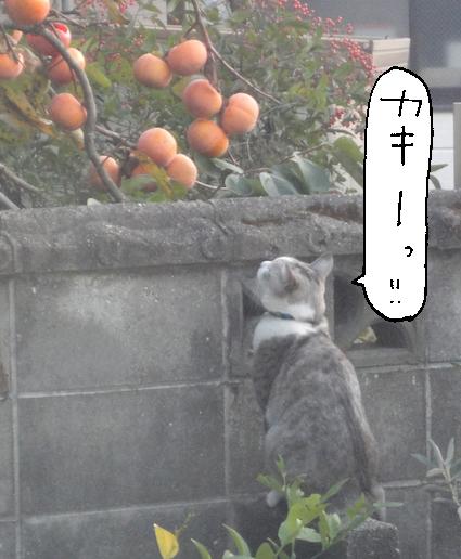 柿3のコピー