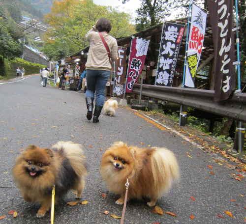 11g10kazurasaru1.jpg