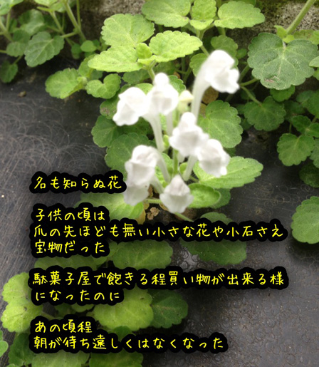 なもしらぬ花