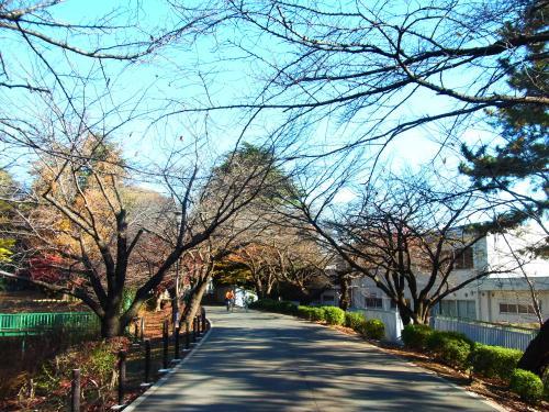 131201-202桜のトンネル(S)