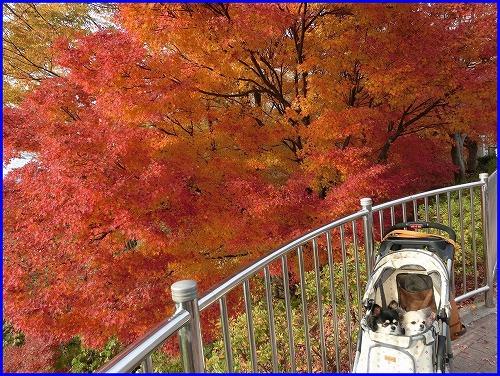 西山2014後 (3)