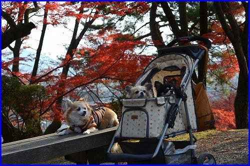 西山2014後 (9)