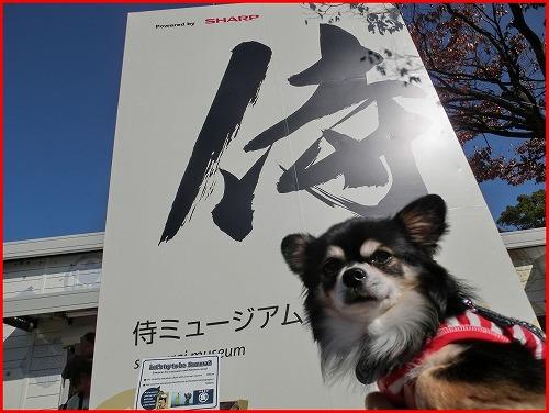 大阪城秋2014 (3)