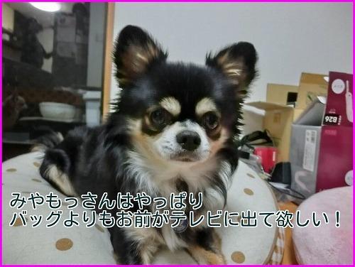 ABC贈り物 (4)