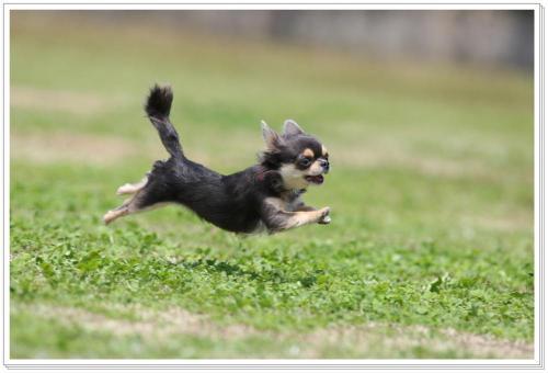 飛行犬10
