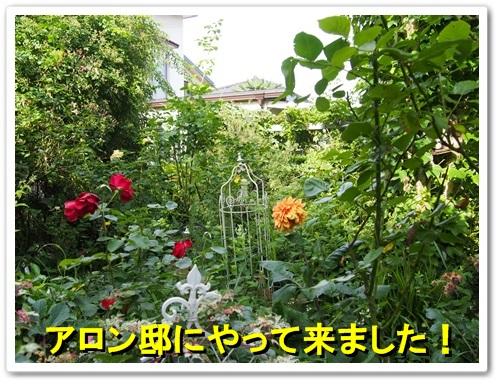 20130616_010.jpg