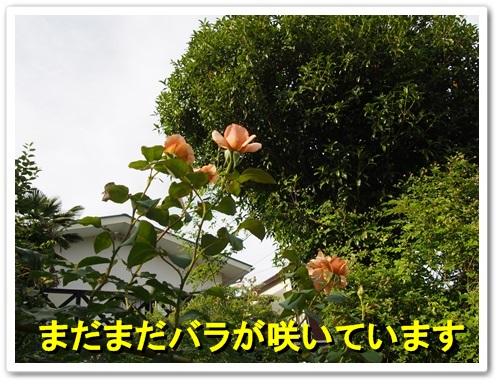 20130616_014.jpg
