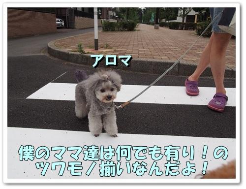20130618_036.jpg