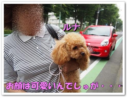 20130619_006.jpg