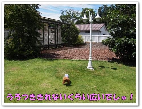 20130622_004.jpg