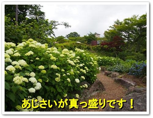 20130623_131.jpg