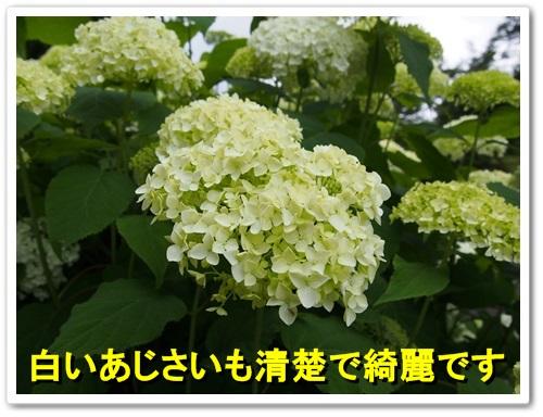 20130623_133.jpg