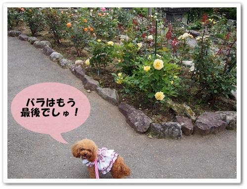 20130623_161.jpg