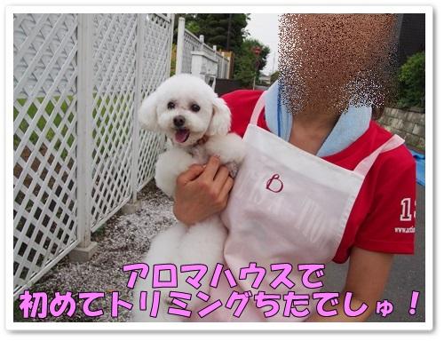 20130624_216.jpg