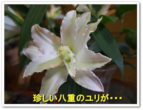 20130706_033.jpg