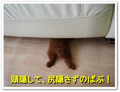 20130708_120.jpg