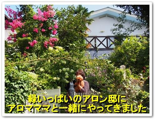 20130728_022.jpg