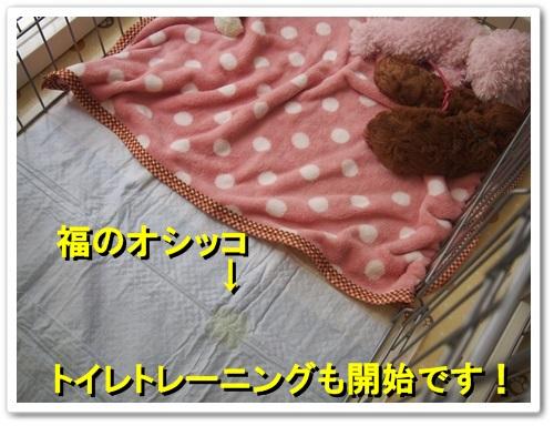 20130825_006.jpg