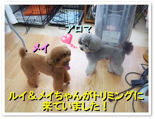 20130916_036.jpg