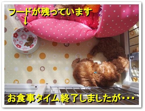 20130921_040.jpg