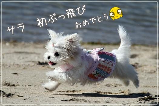 はじめての海7