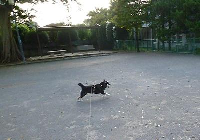 公園ダッシュ