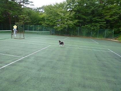 テニスコートもいいんだって