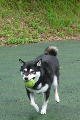 テニスボールラン