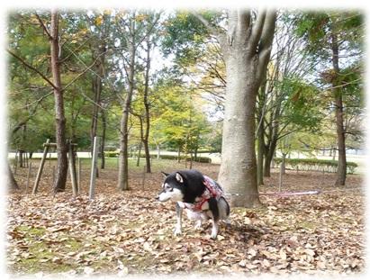 長岡公園2013-4